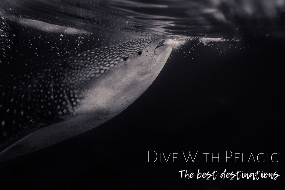 Dive with pelagic, the best destinations !