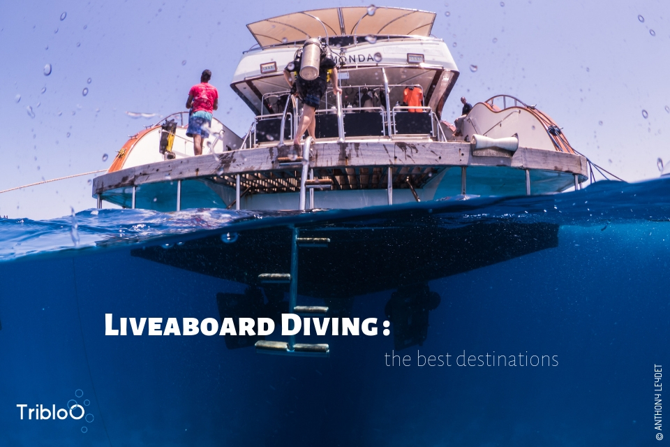 Liveaboard diving : the best destinations