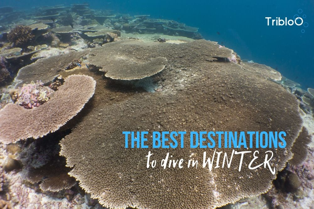 The best destinations to dive in winter !